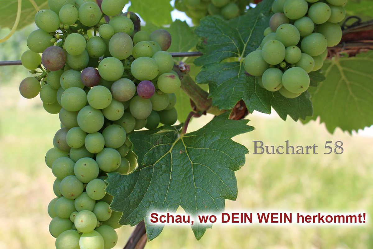 Sooss Juli 2018 Erste Färbunbg der Rotwein Berren 5. Juli