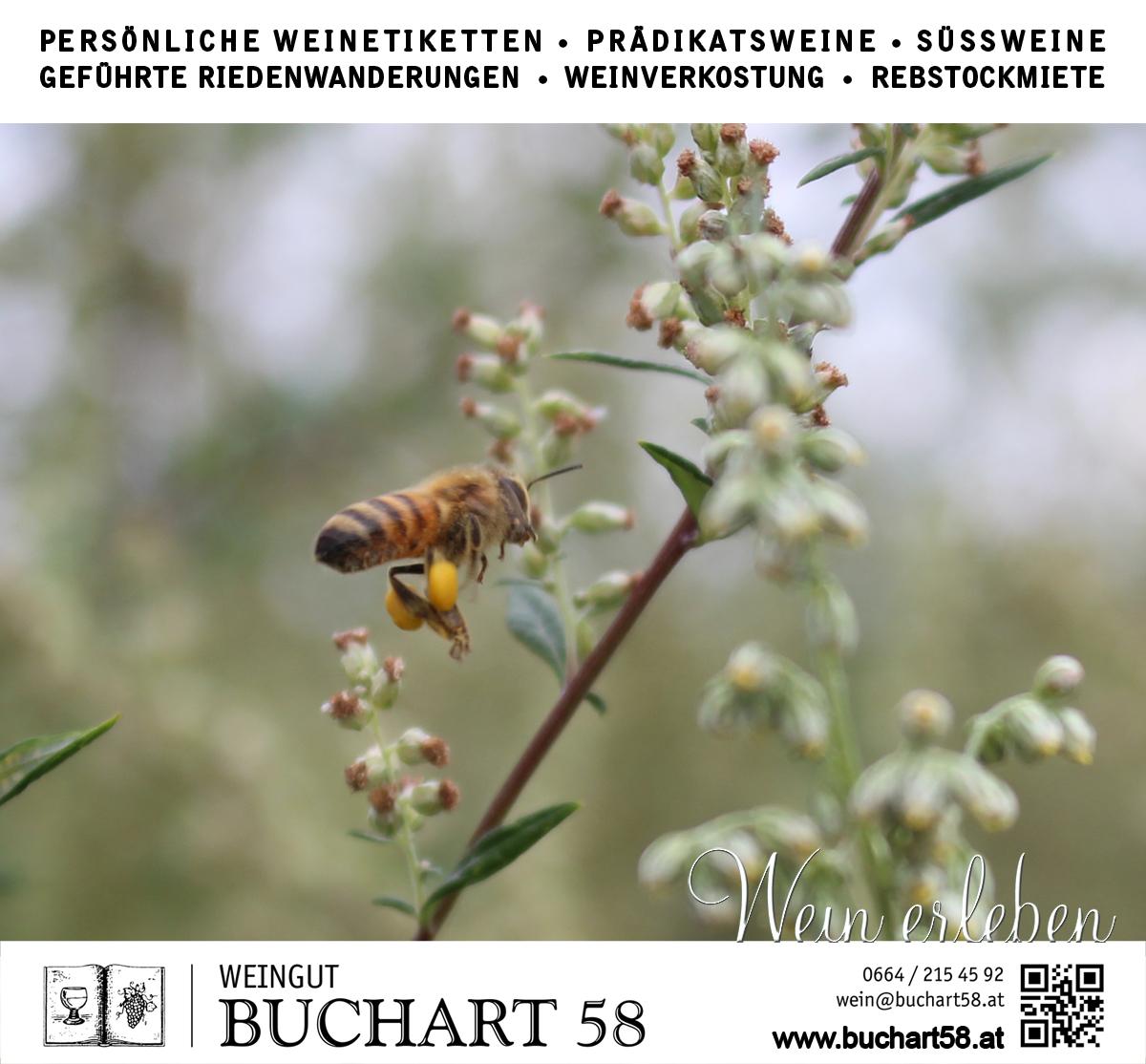 August 2019 WILDBIENEN auf unserem naturbelassenen Freiraum für die Artenvielfalt